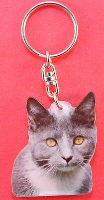 Porte clés chat europeen - European cat keyring