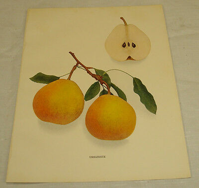 1921 Antique Print/URBANISTE/From Pears of New York, by Hedrick