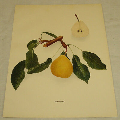 1921 Antique Print/DEARBORN/From Pears of New York, by Hedrick