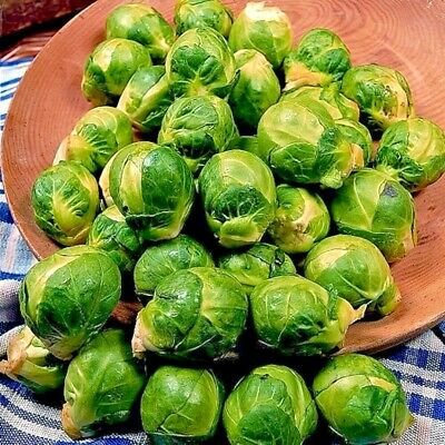 Vegetable Brussels Sprout Seven Hills  Appx 500 seeds