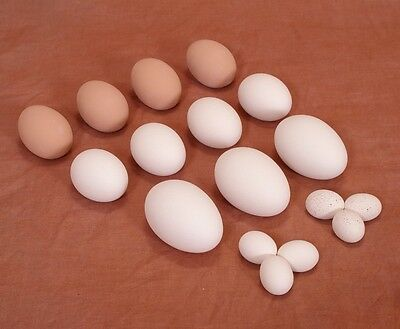 Ceramic Nest Eggs for Hatching, Craft Bird Training Faux Dummy Easter | 3 Sizes