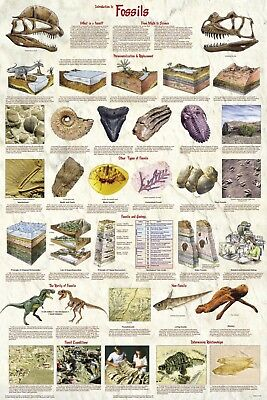 (Laminated) Introduction To Fossils Poster (61X91Cm) Educational Wall Chart Art