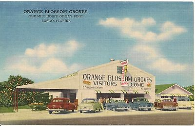 Orange Blossom Groves Largo FL Roadside Postcard