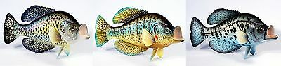"Hand Painted 15"" Crappie Game Fish Replica Wall Mount Decor Plaque Sculpture 81"