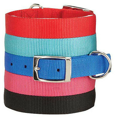 Zack and Zoey Double Layer Nylon Dog Collar Buckle Red Blue Black Pink Durable