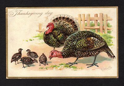 Tuck's Thanksgiving Postcard turkey family outside 1908