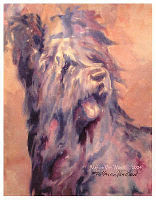 BRIARD BERGER de BRIE FRENCH DOG FINE ART LIMITED EDITION PRINT - Head Study