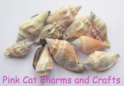 10 x Natural CONCH SPIRAL SEA SHELL BEADS 25-40mm with 1mm Hole