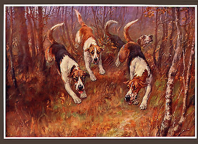 FOXHOUND FOX HUNTING THE RUFFORD HOUNDS by Maud Earl Antique Dog Art Print 1900