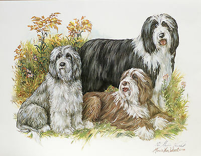 Bearded Collie Beardie Dog Art Limited Edition Print