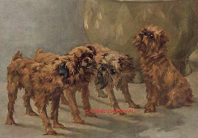 BEAUTIFUL VINTAGE Dog Print 1934 GRIFFONS BRUXELLOIS  Brussels Dogs by MAUD EARL