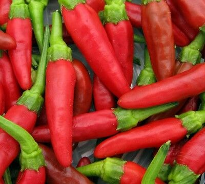 Hot Pepper - Birds Eye Chilli - 30 seeds - Vegetable