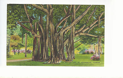The Banyan Tree  St Petersburg   Florida    Unused   Postcard  2314