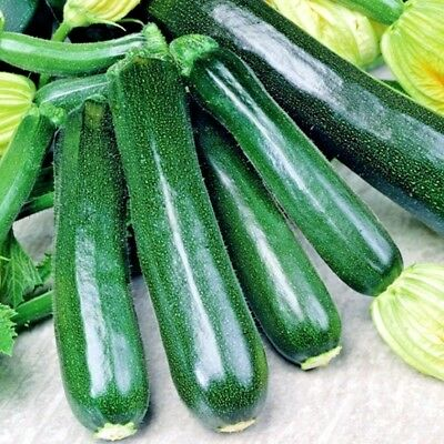 Vegetable Courgette Black Beauty 65 seeds Dark Fog Zucchini