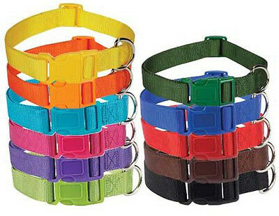 Nylon Dog Collar Bright & Basic Solid Color Pet 11 COLORS 4SIZES Puppy Zack Zoey