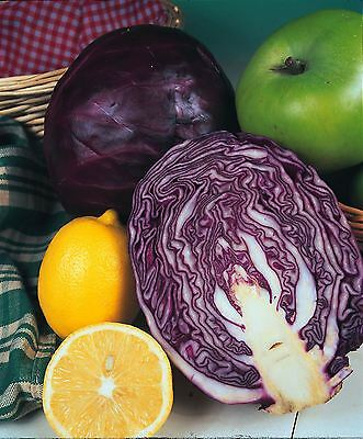 Vegetable - Cabbage - Red Drumhead - 400 Seeds - Economy