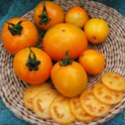 Vegetable - Tomato - Gold Dust - 50 Seeds - Large