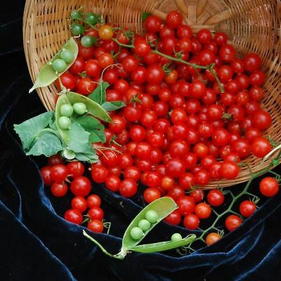 Vegetable - Tomato - Sweet Pea Currant - 10 Seeds - Economy Pack