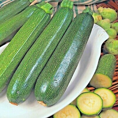 Vegetable Courgette Green Bush 75 seeds Zucchini / Marrow