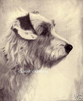 SCARCE Art Dog Print 1935 SEALYHAM TERRIER  Dog by Malcolm Nicholson GORGEOUS!