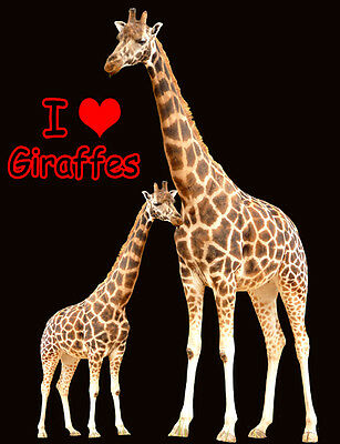 Giraffe Fridge Magnet - Wildlife