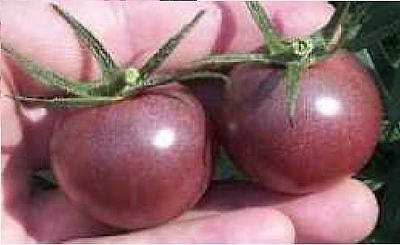 Vegetable - Tomato - Black Cherry - 150 Seeds