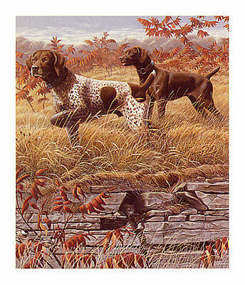 GERMAN SHORTHAIRED POINTER GSP DOG FINE ART LIMITED EDITION PRINT by Mia Lane