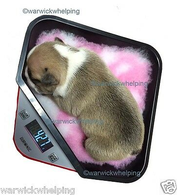 Digital Scales Tray Ideal puppy Whelping Kitchen 150x150mm Vet Fleece liner