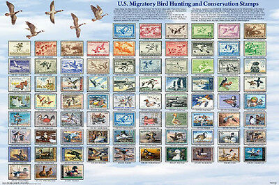 Us Migratory Birds POSTER (61x91cm) Educational Wall Chart Picture Print New Art