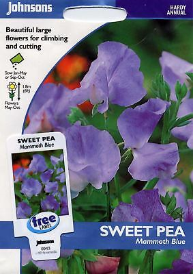 Johnsons Seeds - Pictorial Pack - Flower - Sweet Pea Mammoth Blue - 35 Seeds