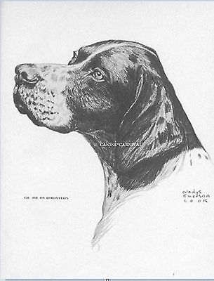 Pointer Champion Hue On Coronation  Vintage Art Print 1962 Gladys Emerson Cook