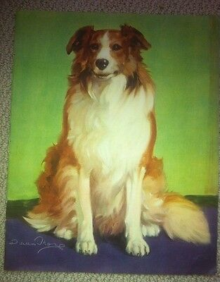 BEAUTIFUL ROUGH COLLIE DOG  ART PRINT Diana Thorne 1935