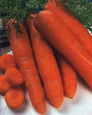 Organic Vegetable - Carrot - Autumn King - 2500 Seeds