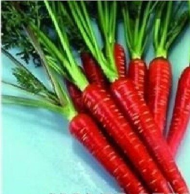 Vegetable - Carrot - Red Samurai F1 - 500 Seeds