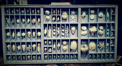 VINTAGE PRINTERS TRAY WITH SHELL COLLECTION