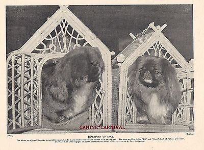 Pekingese Dogs go in Fancy Show Cages 1934 Vintage Art Photo Print Champion Show