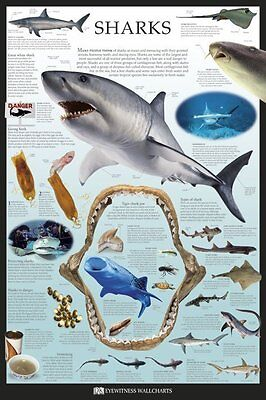 (LAMINATED) Sharks POSTER (61x91cm) Educational Chart Picture Print New Art