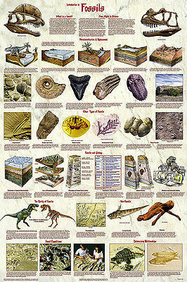 INTRO TO FOSSILS Laminated POSTER Print Educational Geology Paleontology Art