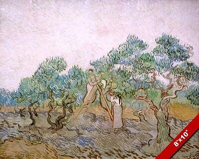 Vincent Van Gogh The Olive Orchard Harvest Painting Art Real Canvas Print