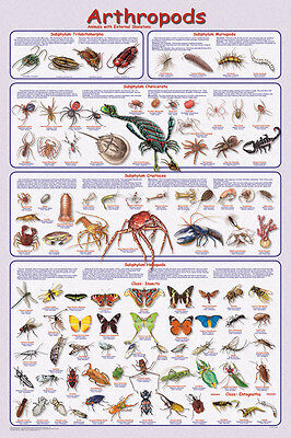 (LAMINATED) Arthropods POSTER (61x91cm) Educational Chart Picture Print New Art