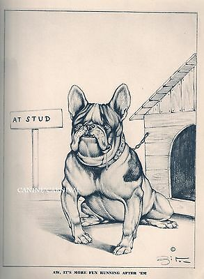 HUMEROUS RISQUE VINTAGE Dog Print 1947 FRENCH BULLDOG ? ENGLISH  AT STUD Zito