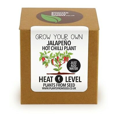 Plants From Seed - Grow Your Own Jalapeno Hot Chilli Plant Kit