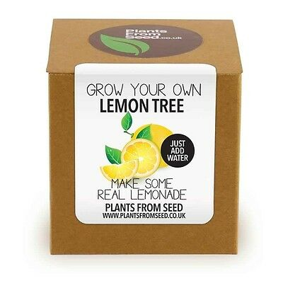 Plants From Seed - Grow Your Own Lemon Tree Plant Kit