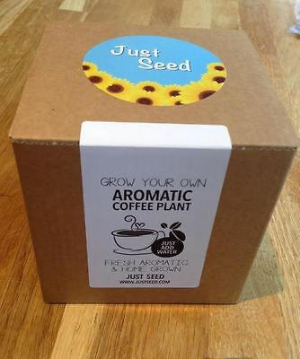 Just Seed - Grow Your Own Coffee Plant Kit