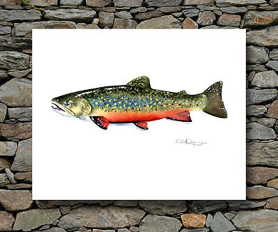 BROOK TROUT Painting Fly Fishing ART Print Signed by Artist DJR