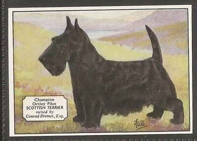 Ardath Extra Large Card-Champion Dogs-#04- The Scottish Terrier