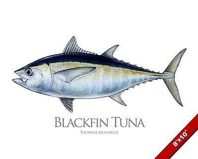 Blackfin Tuna Fish Painting Atlantic Fishing Art Real Canvas Print