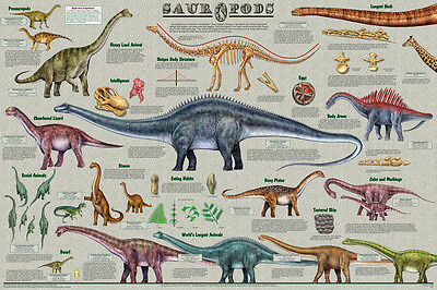 (LAMINATED) Dinosaur Sauropods Lizard POSTER (61x91cm) Educational Wall Chart