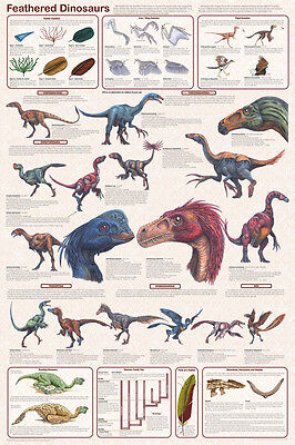 (LAMINATED) Feathered Dinosaurs POSTER (61x91cm) Educational Wall Chart Picture