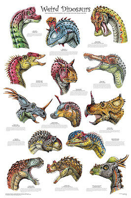 WEIRD DINOSAURS POSTER (61x91cm) EDUCATIONAL WALL CHART PICTURE PRINT NEW ART